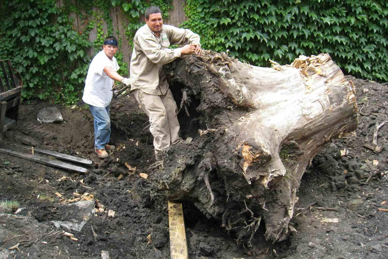 desenterrando el tocón de un árbol