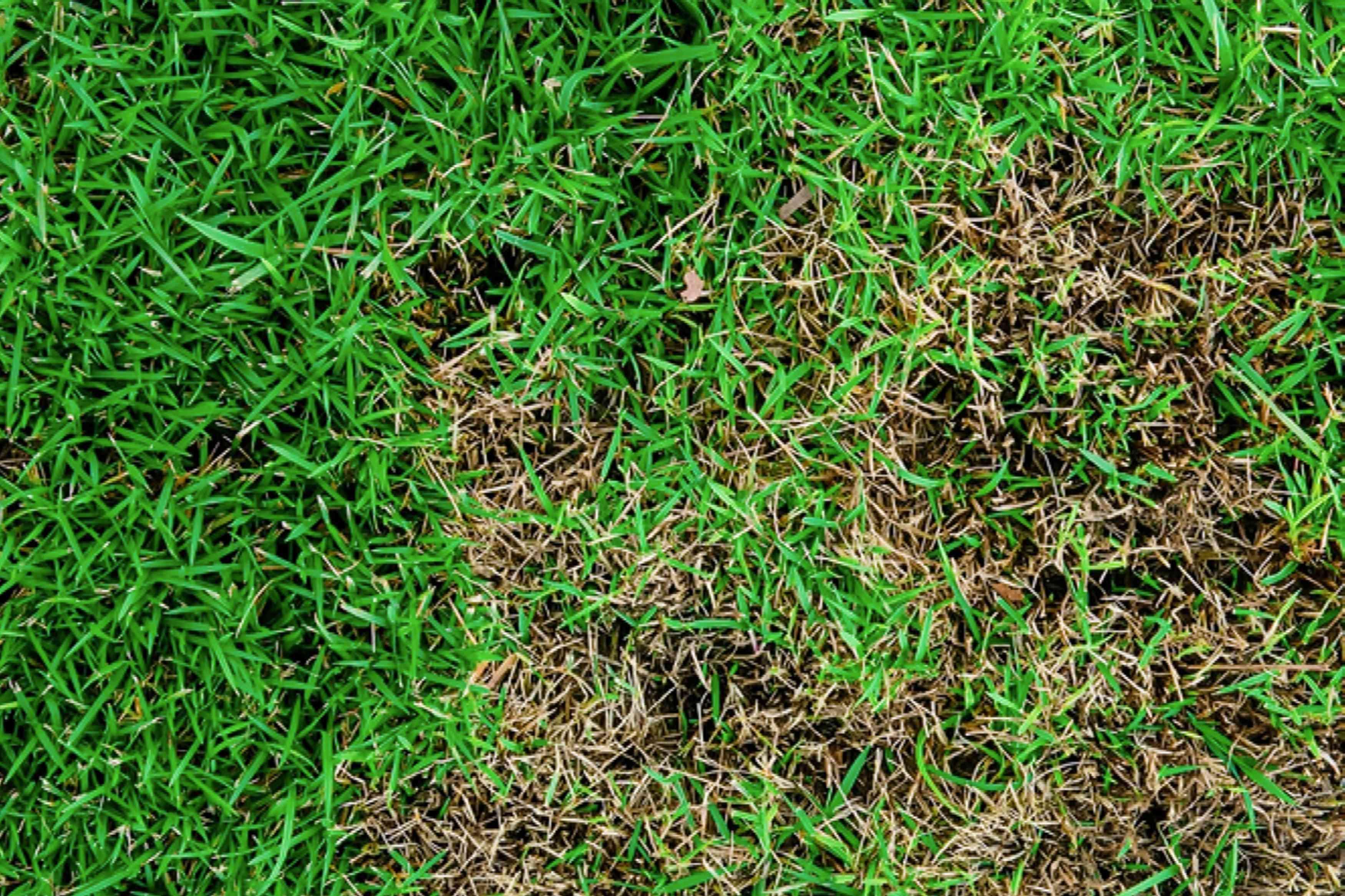 Bird's eye view of grass
