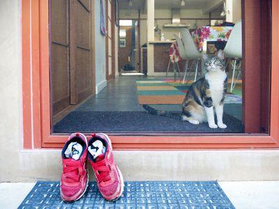 A cat behind a sliding screen door
