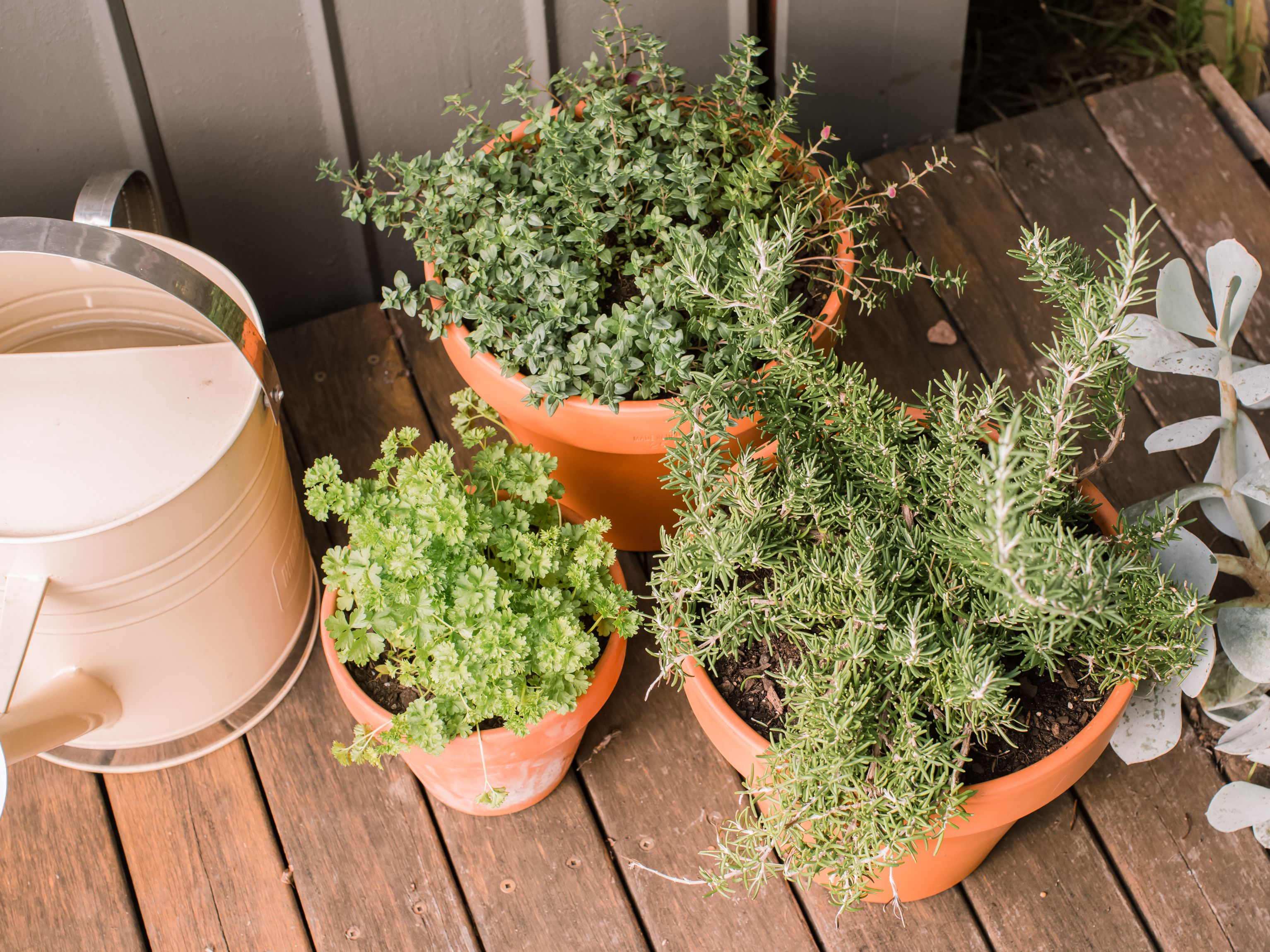 Easy Tips For Growing Herbs In Containers