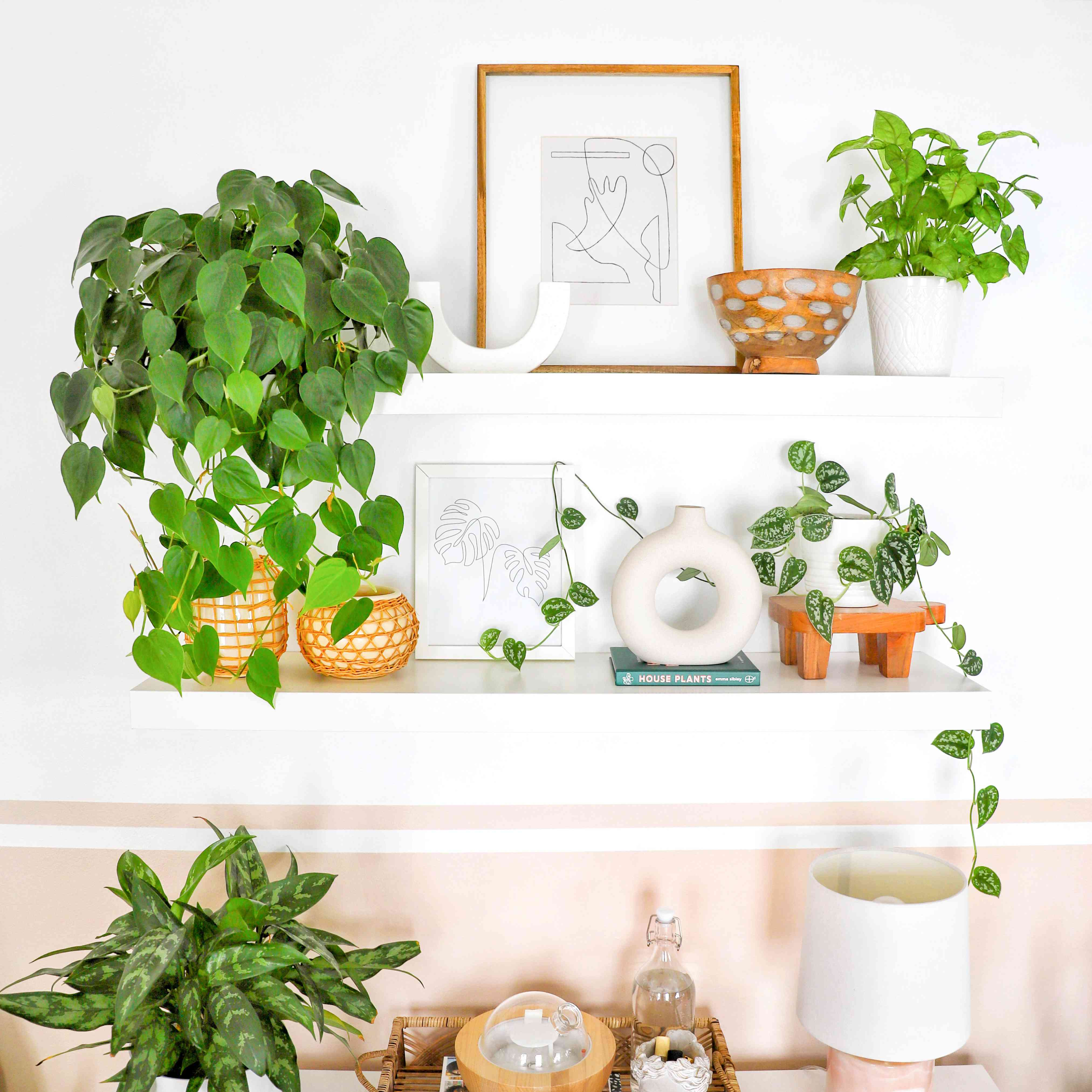 Ana Isaza plant shelf