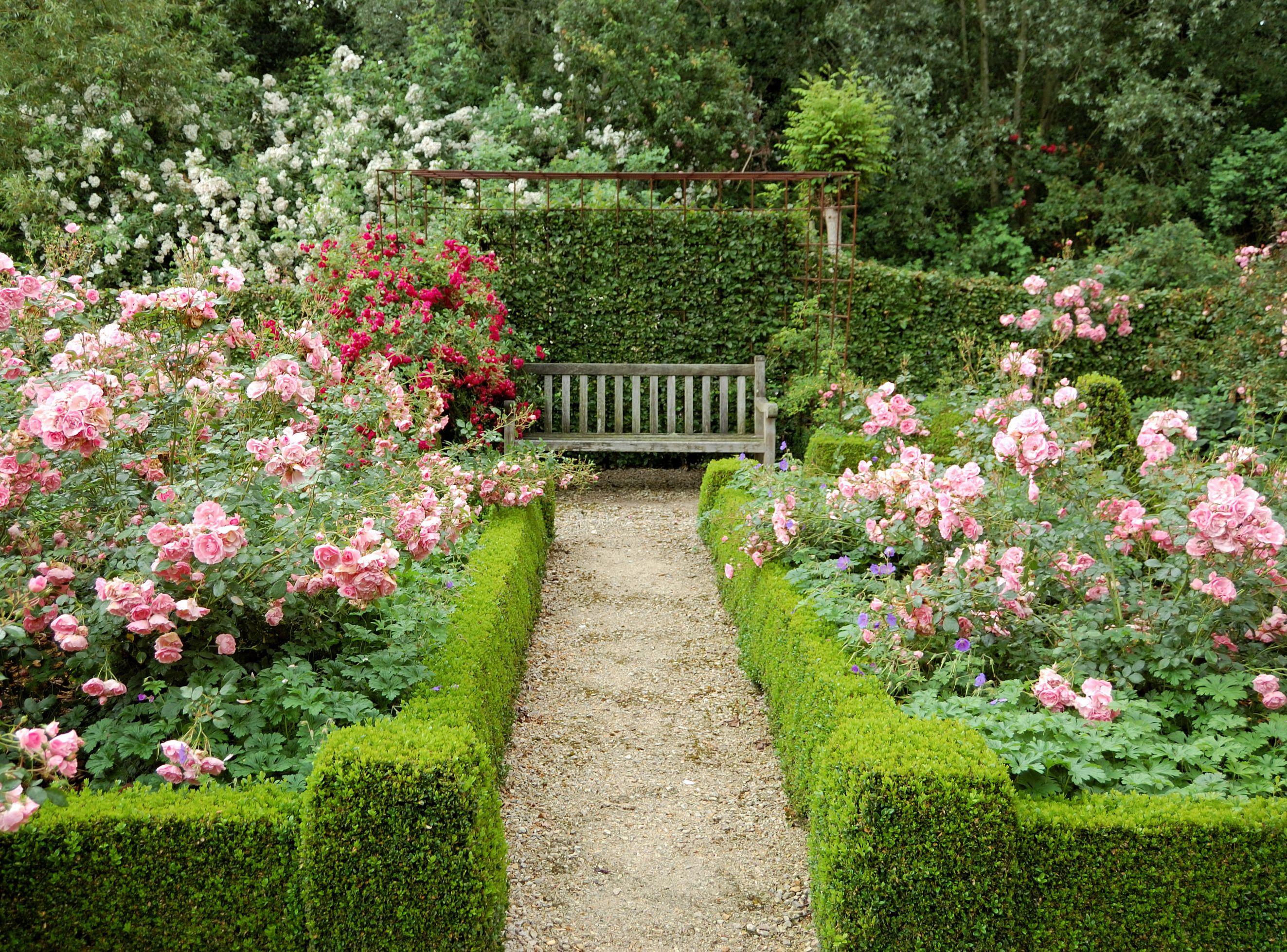 13 Best Shrubs For Making Hedges