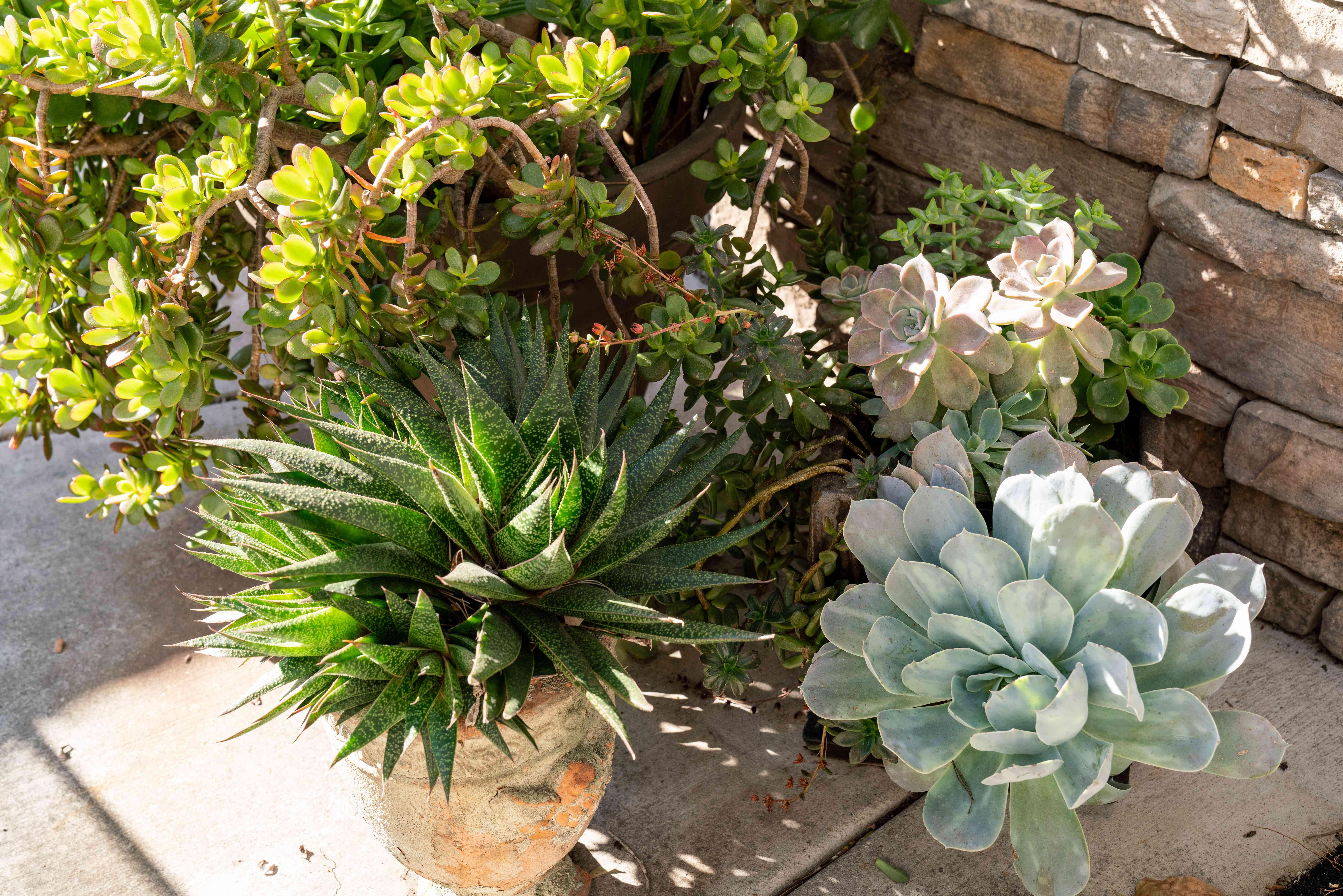 Free garden plants in pots sitting outside be taken