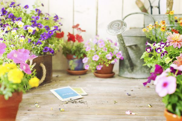 Spring Garden Flowers and Flower Seeds on an Old Wood Table
