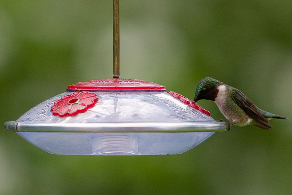 How to Stop Hummingbird Feeder Leaks