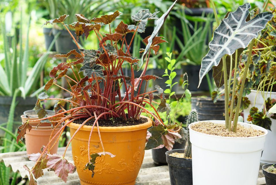 Container gardens all together