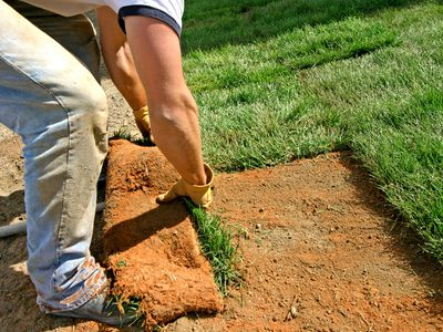 Man laying sod grass down to start a new lawn.