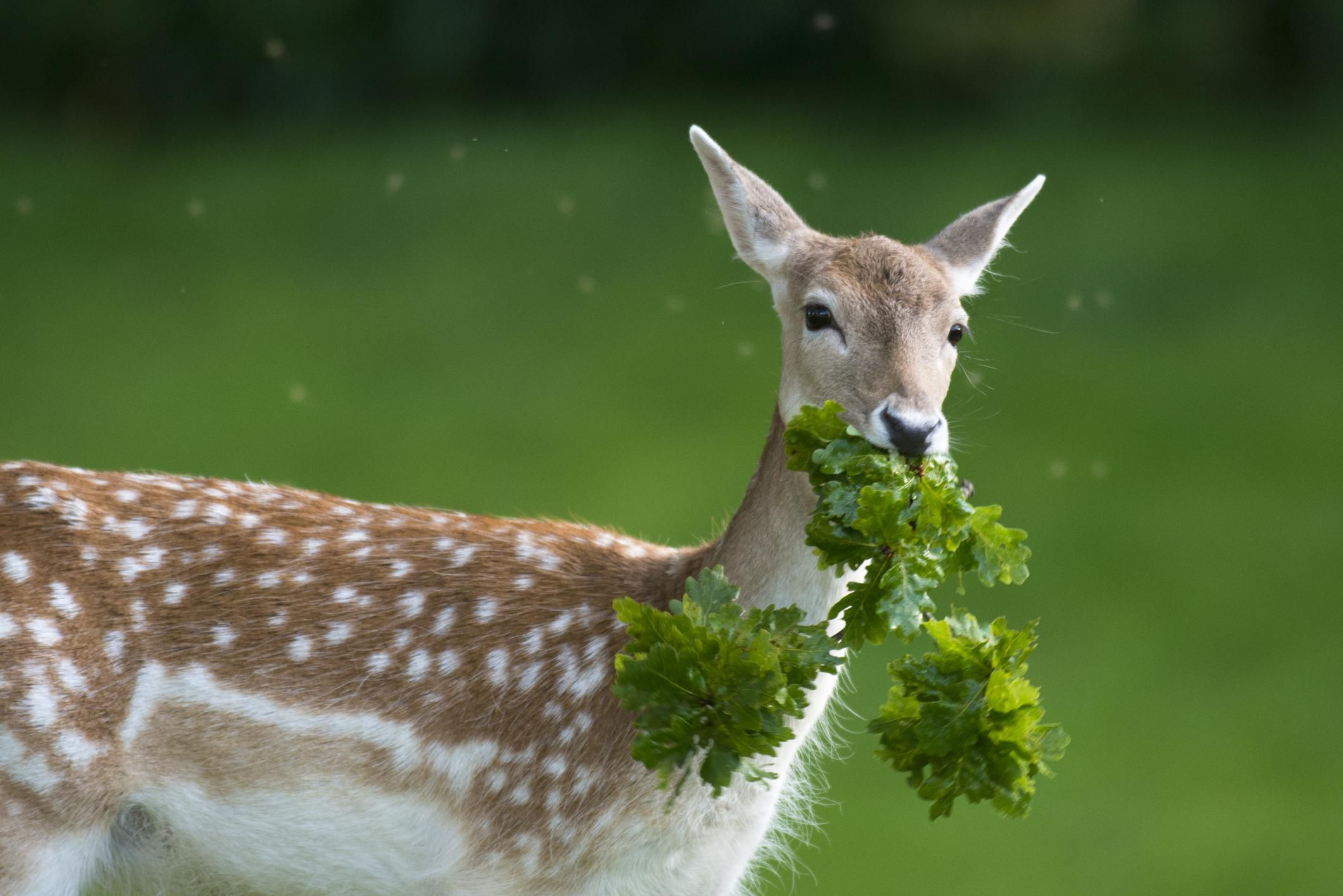 Deer Resistant Plant Lists By State