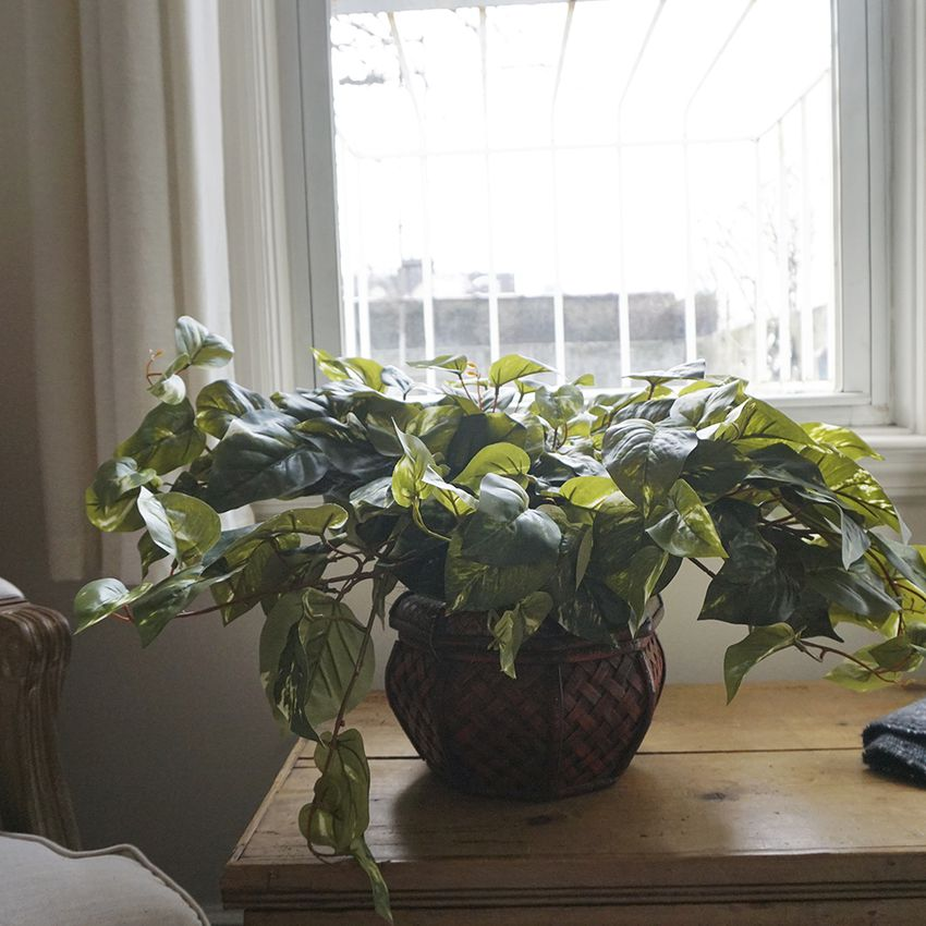 Nearly Natural Pothos Silk Plant