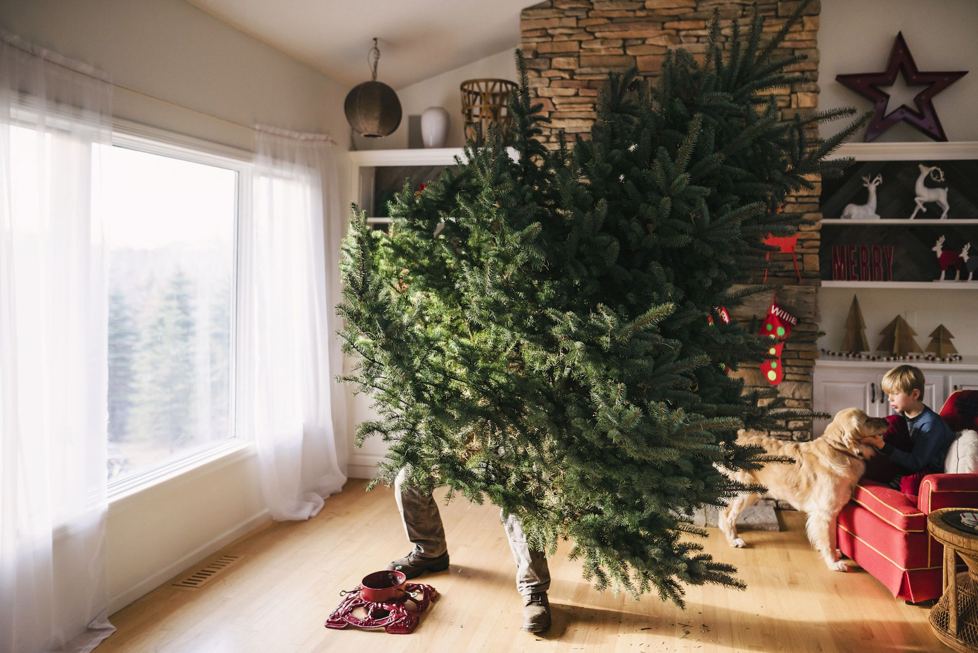 The 6 Best Christmas Tree Stands Of 2021