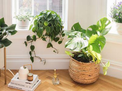 houseplants by a window
