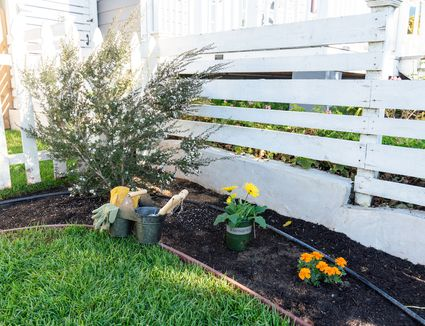 Free flowers and shrubs being planted in backyard near white fence and grass