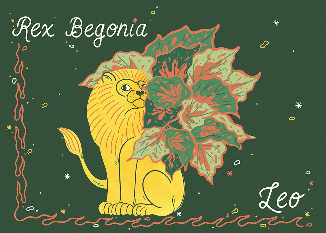 leo rex begonia illustration