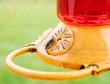 bee on hummingbird feeder