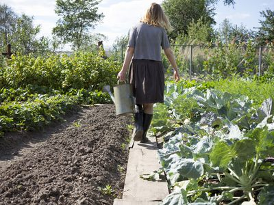 9 Things To Know About Starting A Garden From Scratch