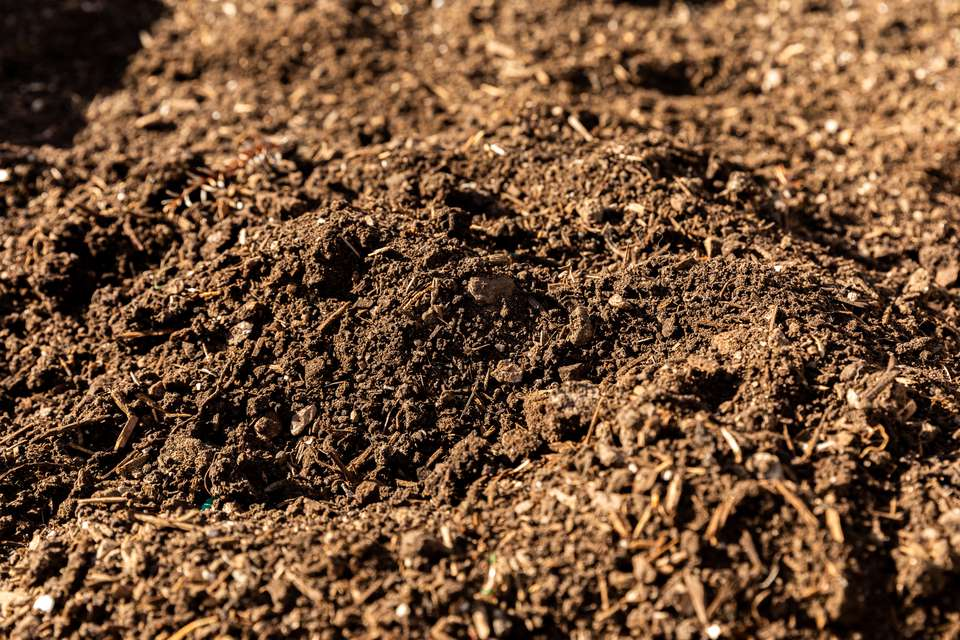 Soil with good acidity in sunlight closeup