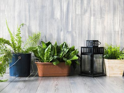 Container plants on the floor