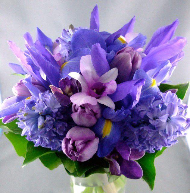 Ramo de iris holandés