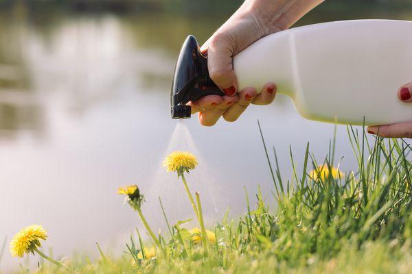 spraying vinegar on weeds