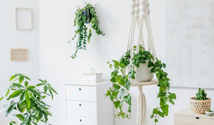 houseplants in an interior