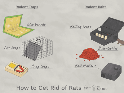 How to Use a Rat Trap Q&A