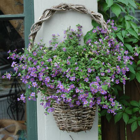 9 Best Colorful Plants For Hanging Baskets