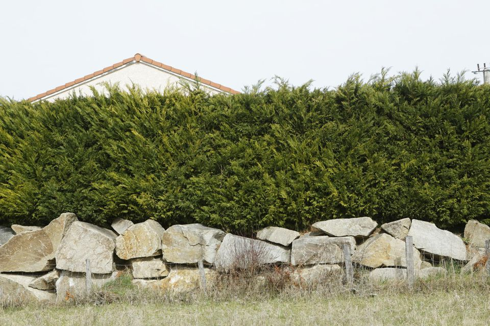 Detached house well-hidden behind a large hedge