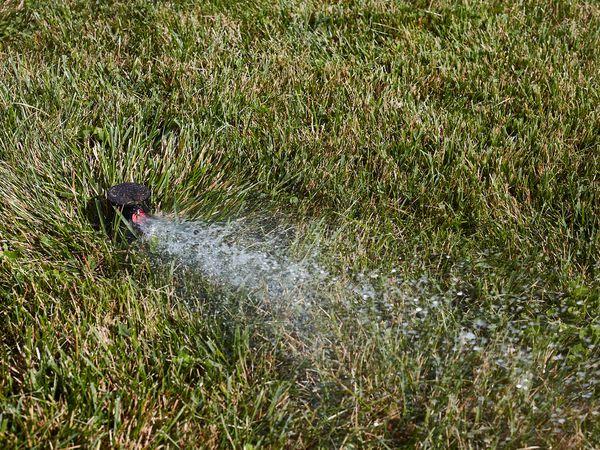 Lawn sprinkler spraying water on grass