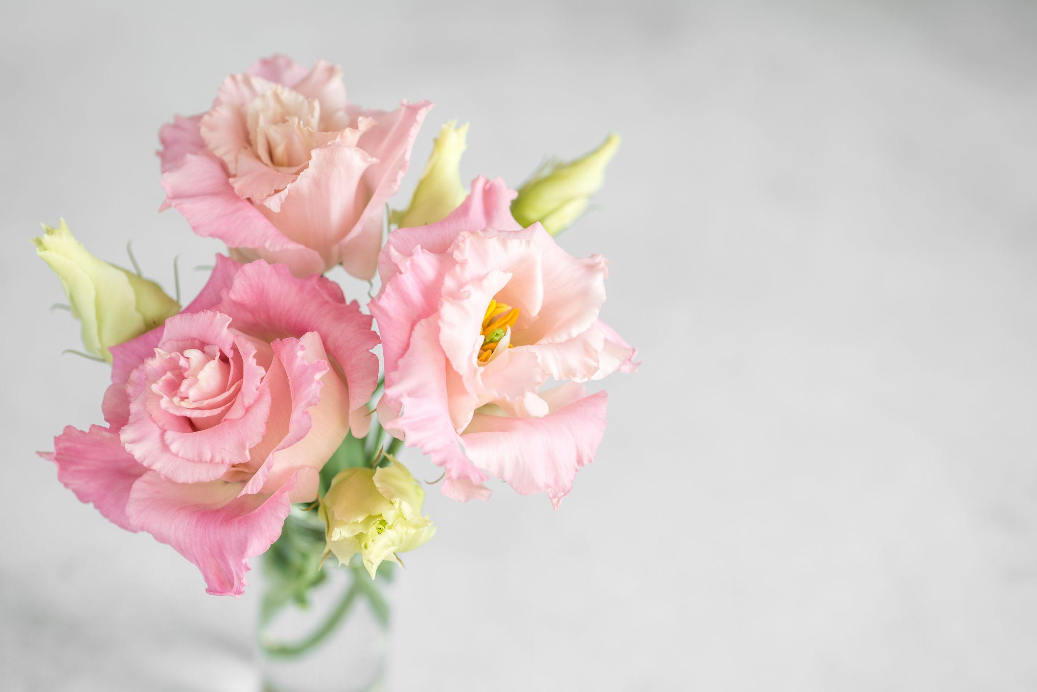 Fresh pink flowers of Lisianthus