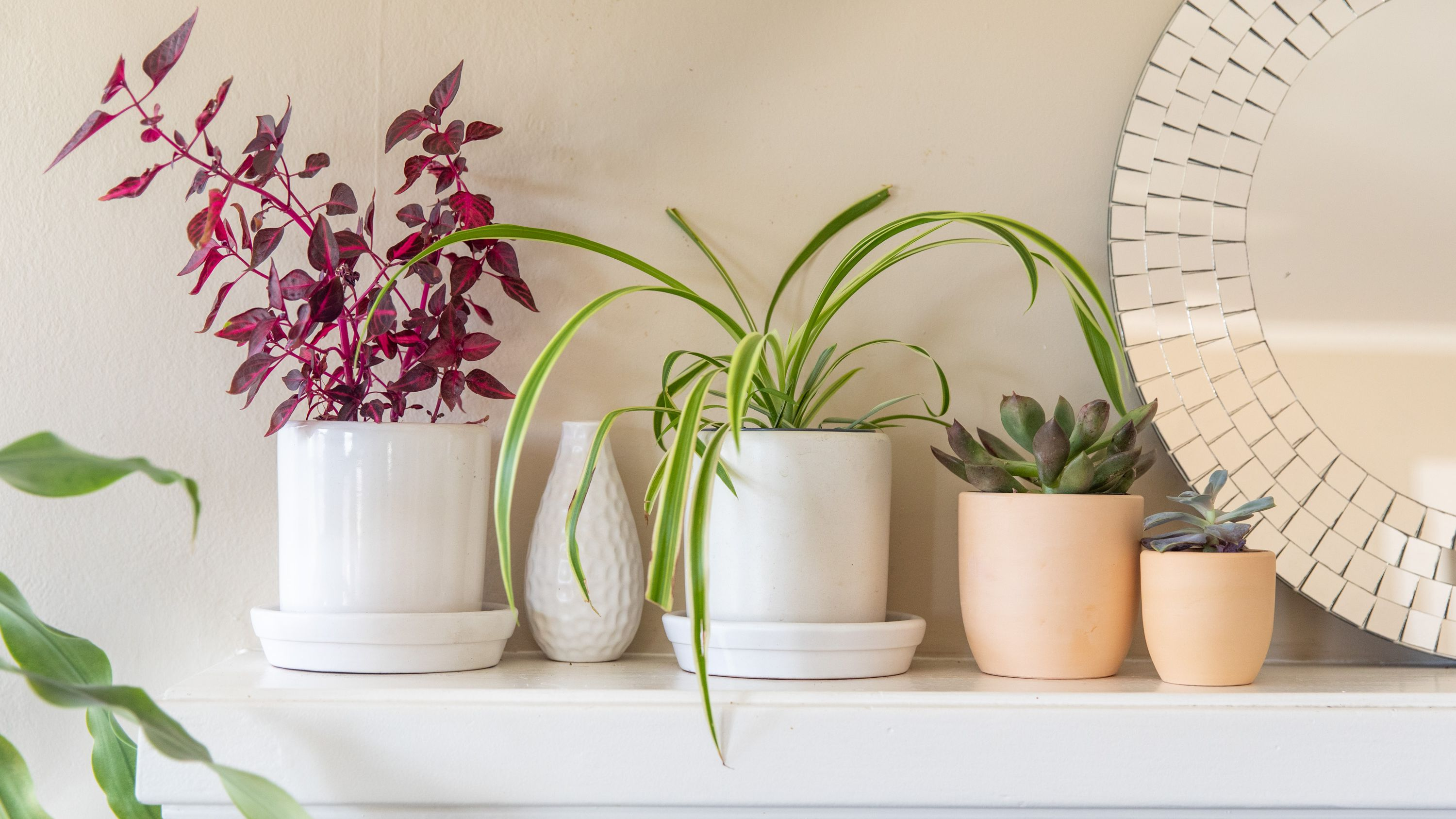 6 Great Ways To Decorate With Plants