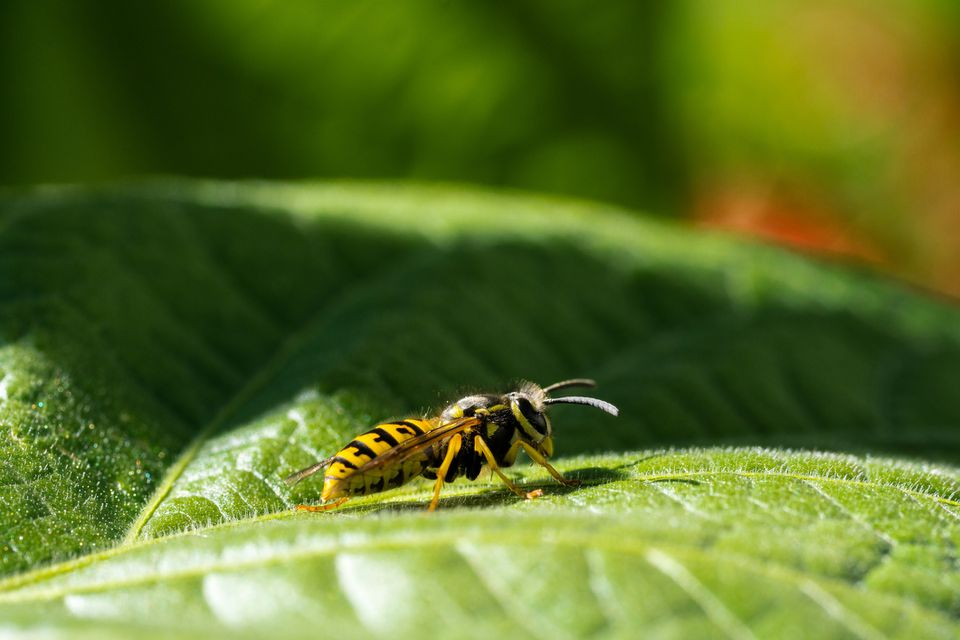 Close-Up Of Insect On Leaf