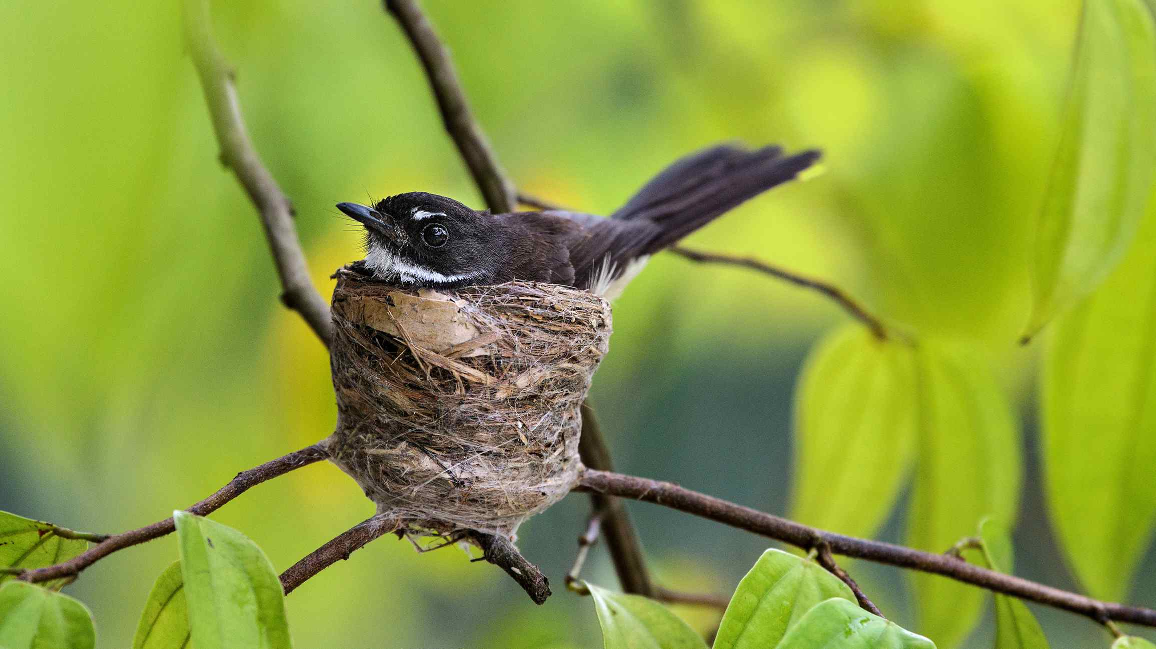 bird in small nest