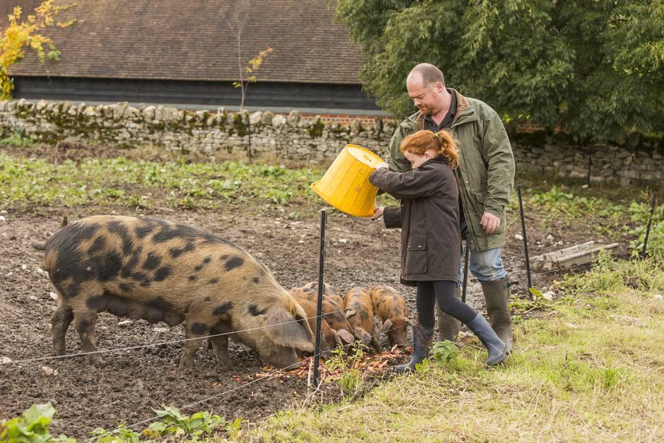 Farmer and Girl Feeding Pigs Vegetables on an Organic Farm