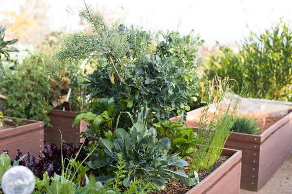 Vegetable garden designed with different plants and growing in raised garden beds
