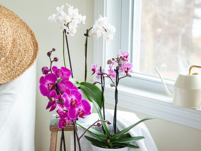 orchids by a watering can