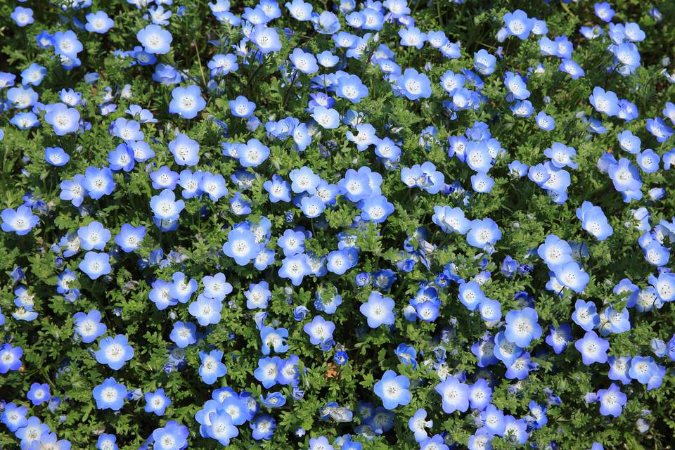 Blue flowers on a grassy field