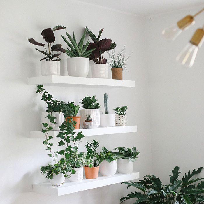 Lee Funke plant wall