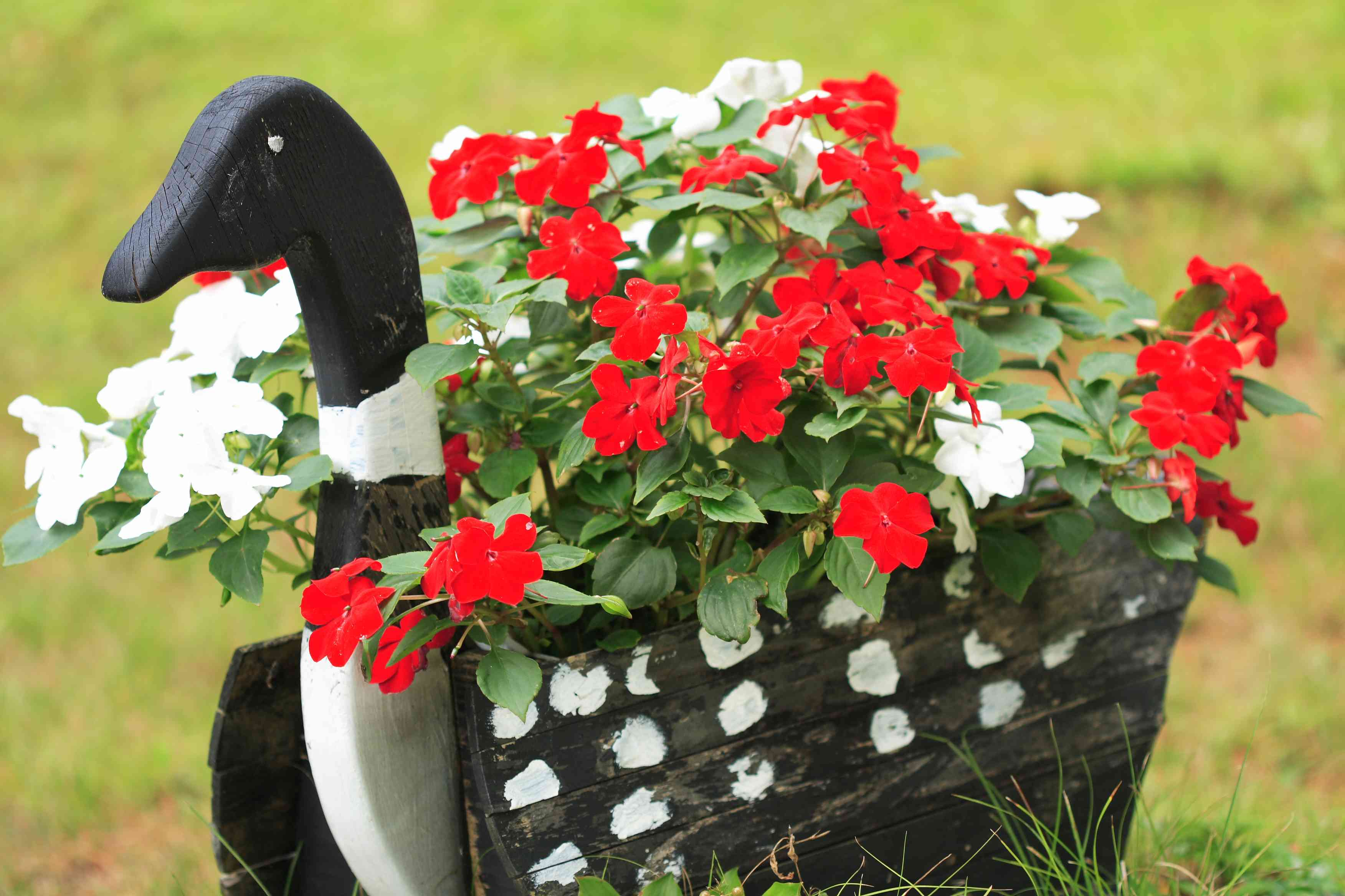 Loon Flower Basket