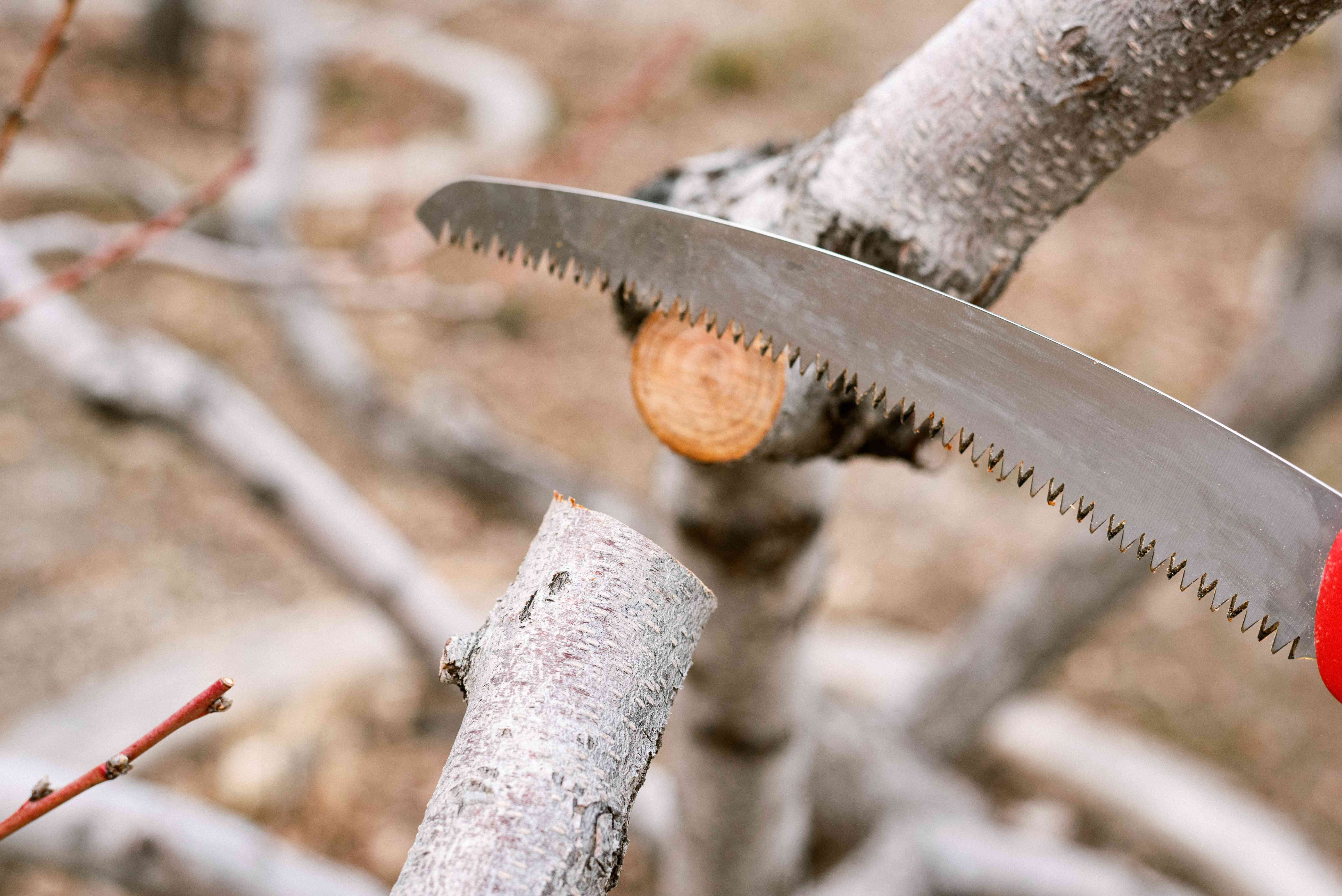 Shrub branch cut away smoothly with pruning saw