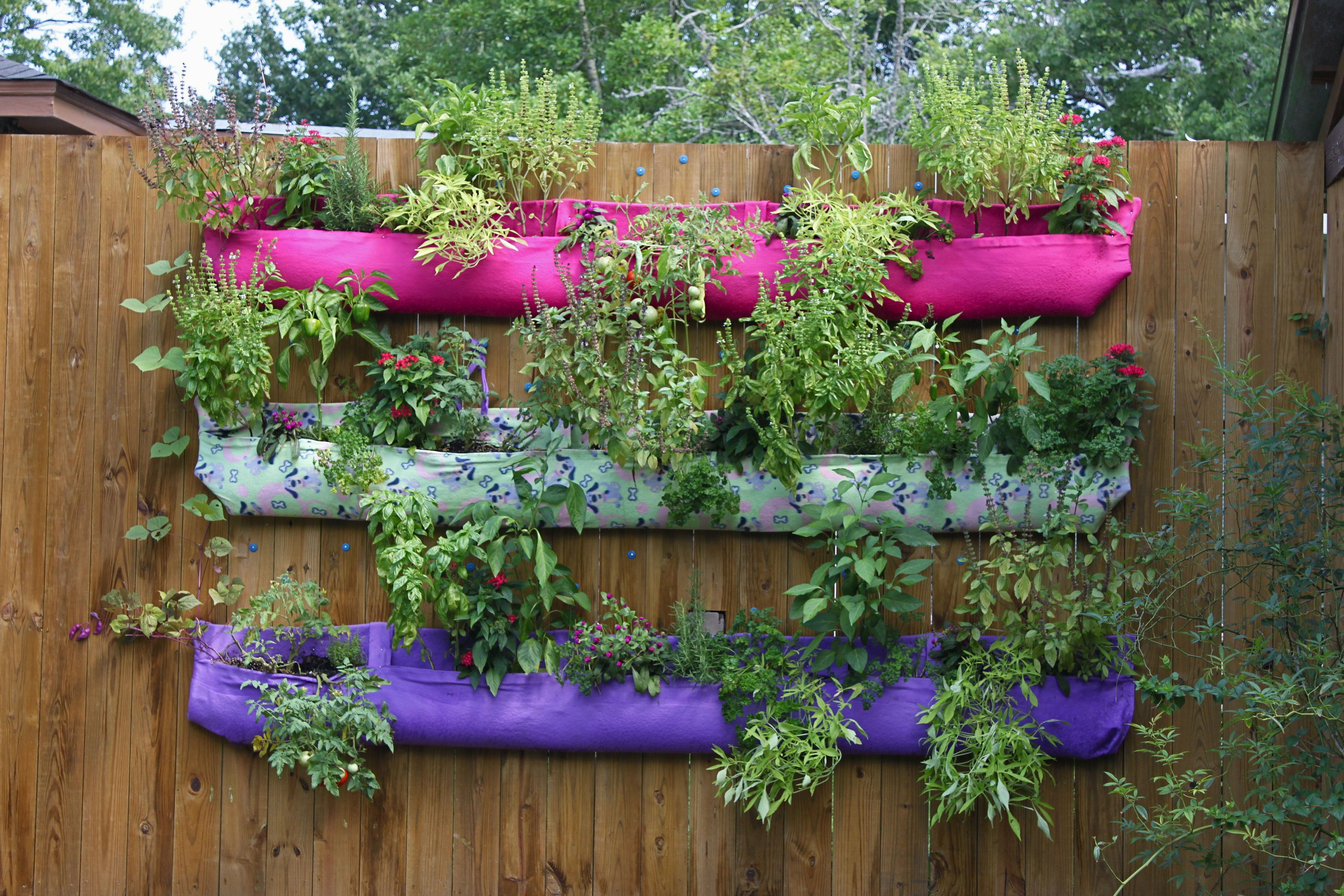 Wall pocket garden with three rows of plants mounted on a wall.