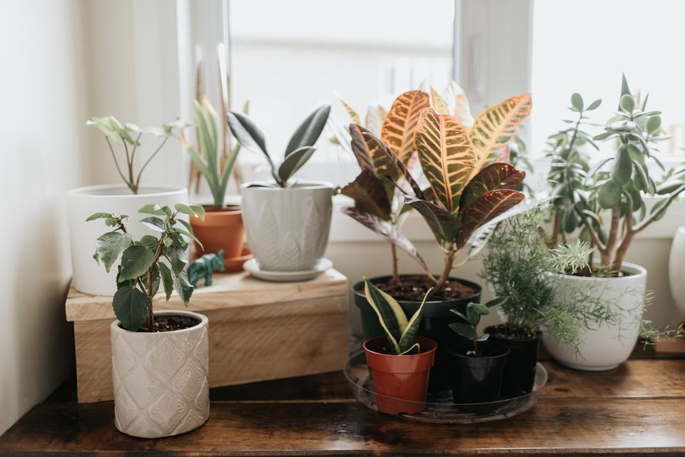 group of plants