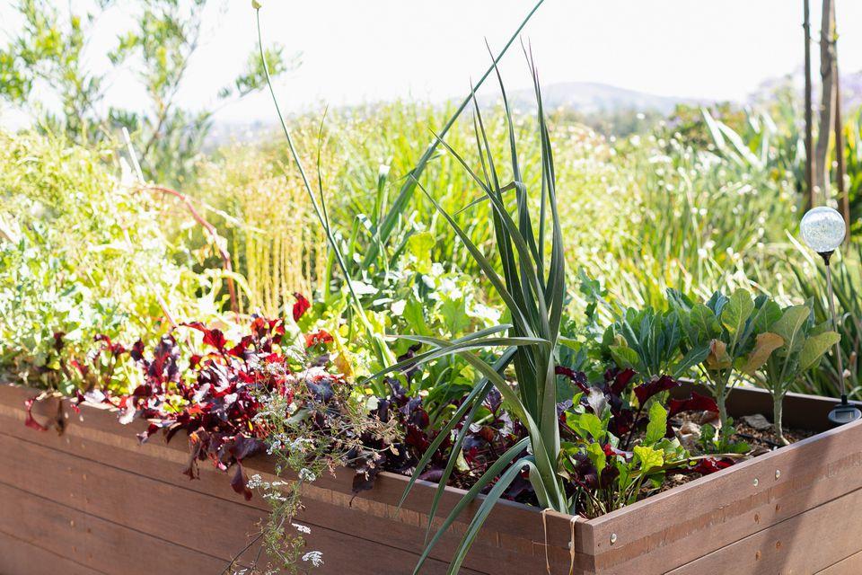 Vegetable garden with an assortment of plants in raised garden bed
