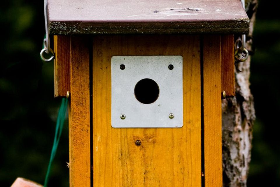 Birdhouse With Entrance Hole Protector Plate