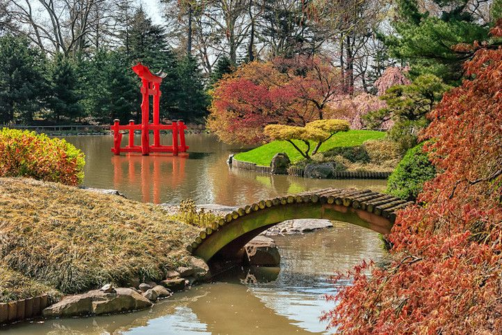 wooden bridge over pond with Japanese maples in foregroudnand background and red Japanese temple structure arising from water.