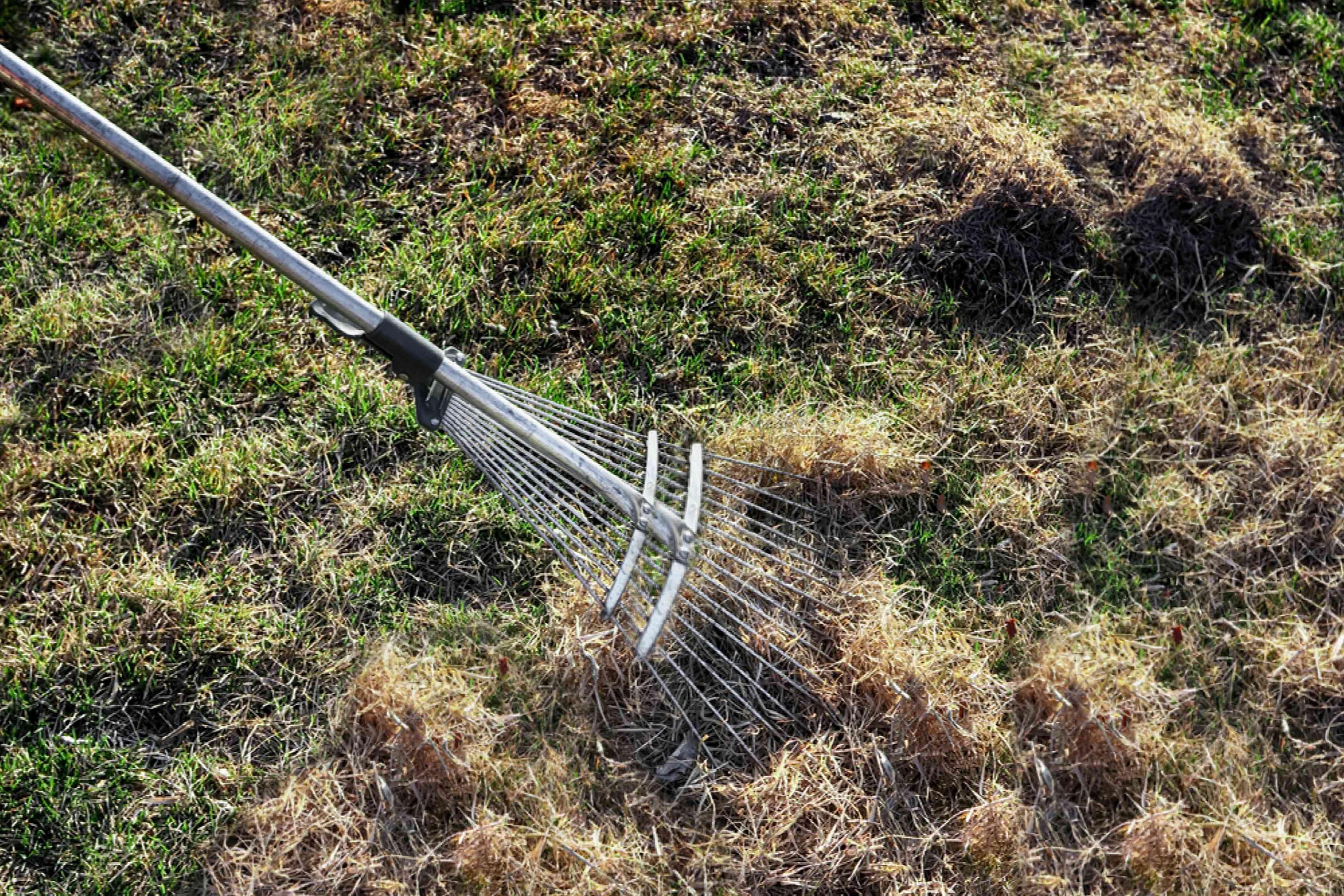 raking dead grass