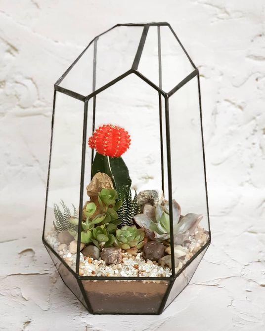 Cactus en terrario geométrico