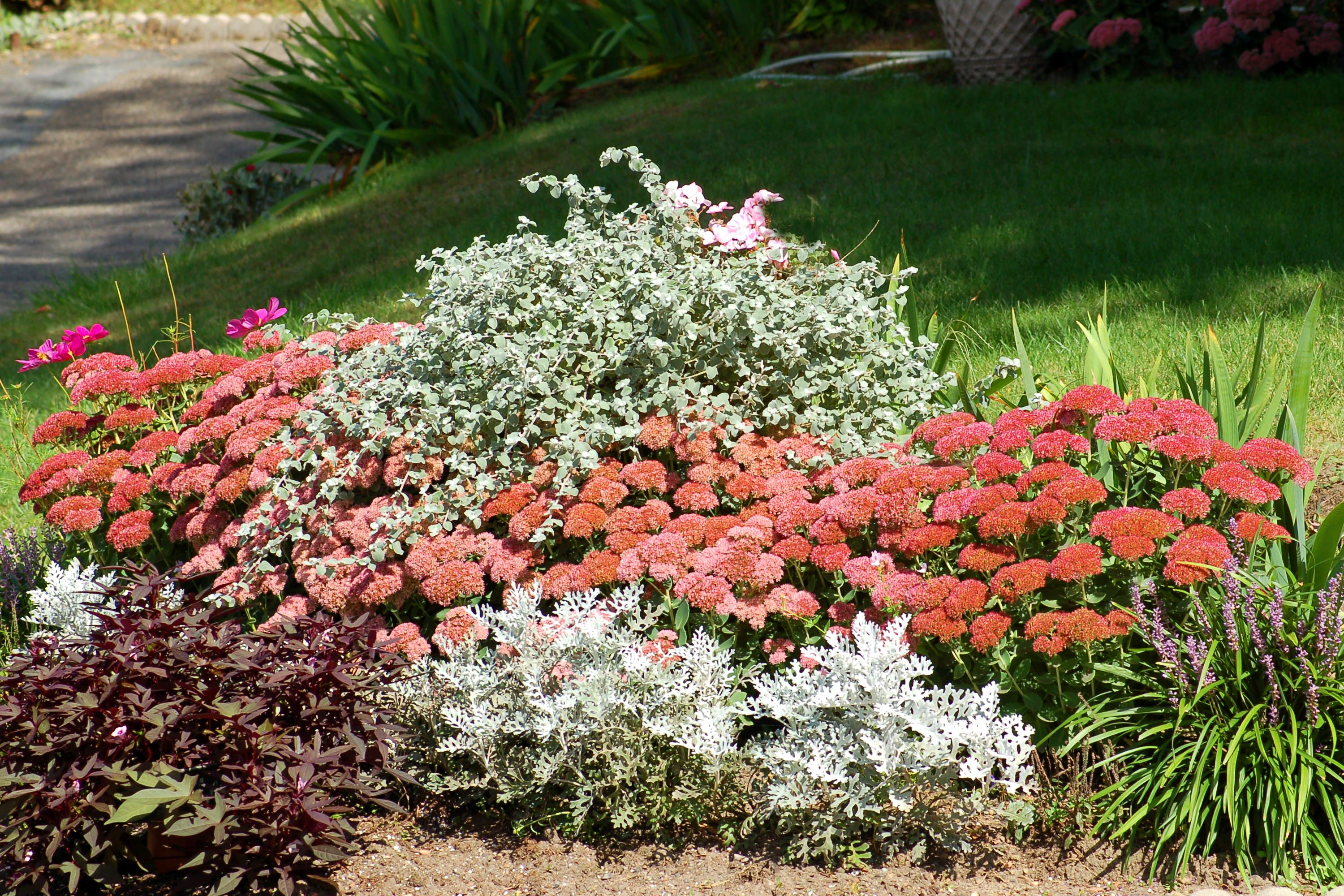 A flower border with 'Autumn Joy' sedum. This is a good planting for fall.