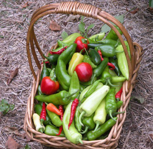 Basket of Hot Peppers.