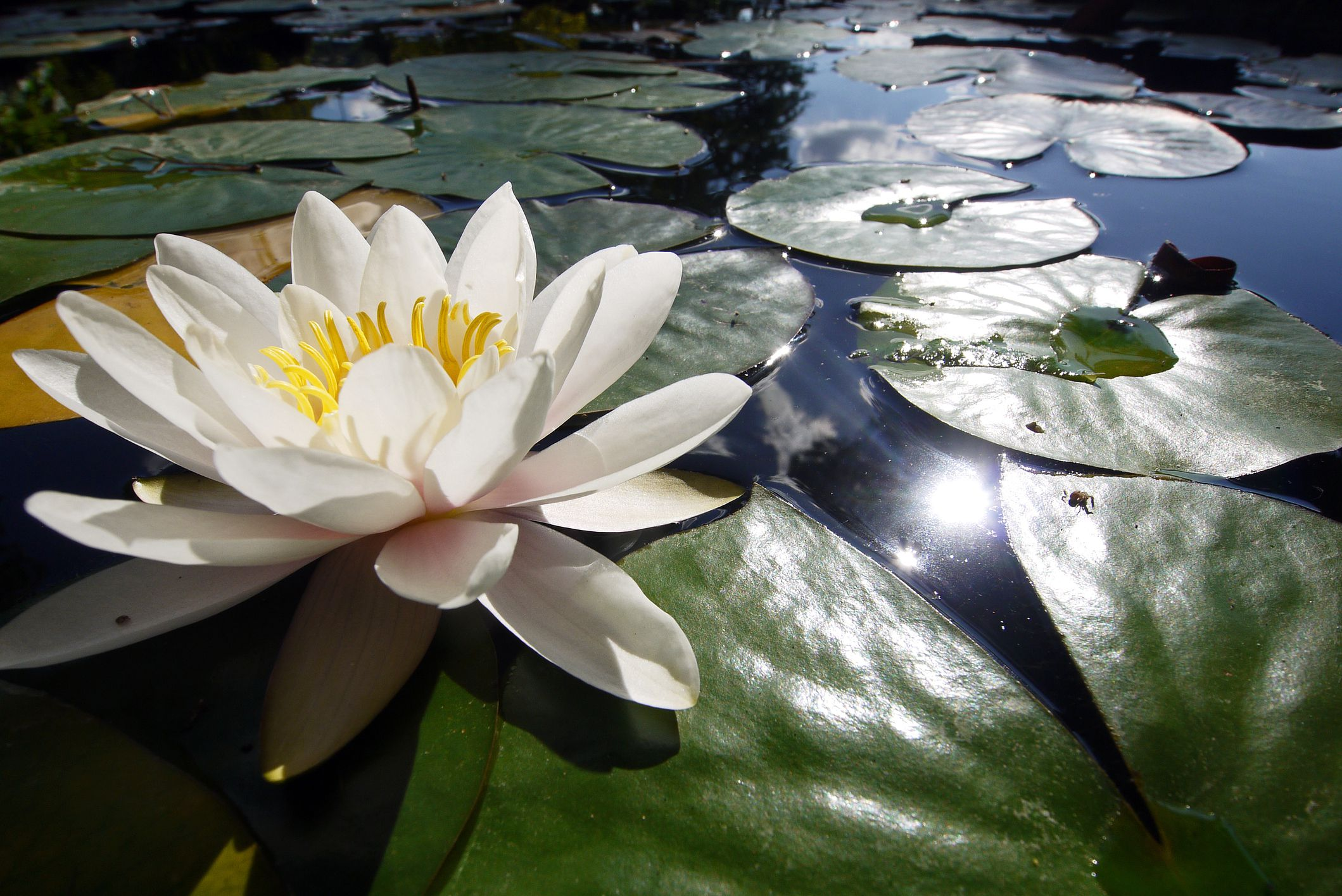 9 Great Plants For Small Backyard Ponds