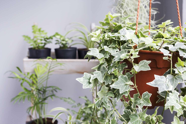 Concepto de hogar y jardín